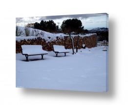 תמונות לפי נושאים קור | בודדים בשלג