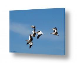 צילומים בעלי חיים | טיסת מבנה