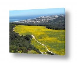 תמונות לפי נושאים צילום אוויר | צהוב עולה...