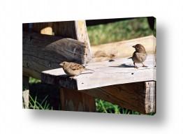 צילומים בעלי חיים | זוג על הספסל