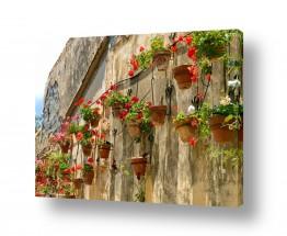 תמונות לפי נושאים צבעים | גינה בקיר 01