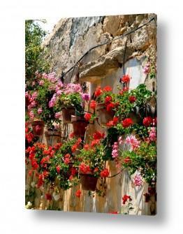תמונות לפי נושאים צבעים חיים | גינה בקיר 02