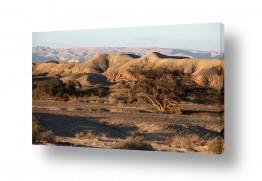 נוף חול | נוף בערבה