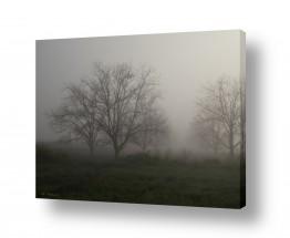 צילומים תמונות שחור לבן | ערפילי בוקר
