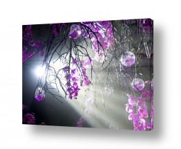 צמחים צמח בר | ביער הסחלבים 03