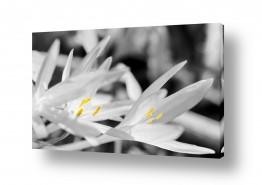 צילומים צילום תקריב | סיתוונית בשחור לבן וצבע
