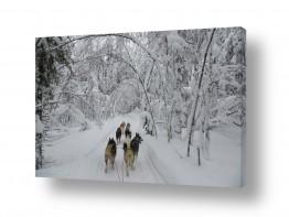 חיות חיות מחמד | טיול ביער