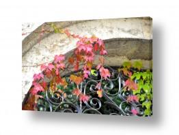 צילומים מזג-אוויר | שער לסתיו