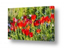 תמונות לקופות חולים | אדום של אביב