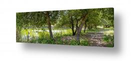 תמונות לפי נושאים צבעים | שביל ביער
