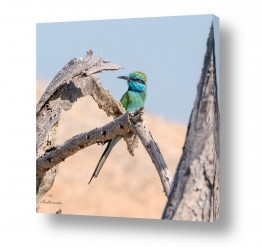 צילומים בעלי חיים | צבעים