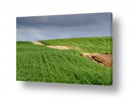 שדות שדות חיטה | מתפתל למעלה