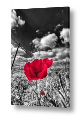 צמחים פרחים | טבע אדום