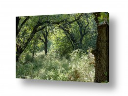 תמונות לפי נושאים סבך   סבך ביער