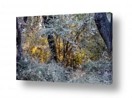 צילומים טבע | השקיעה שבין עצי היער