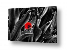 שילובים של צבע שחור שחור לבן | צבע אדום