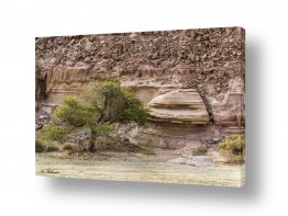 נוף טבע דומם | פטרייה של סלע