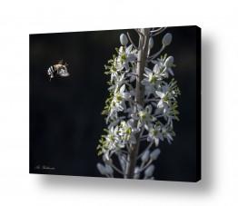 חיות בר דב | באה דבורה לעבודה