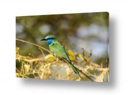 תמונות לפי נושאים חיות | צבעים של שרקרק