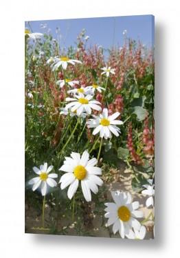 פרחים זר פרחים | קחוון הנגב בנגב.