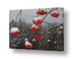צילומים תמונות שחור לבן סלקטיבי | Red & Snow