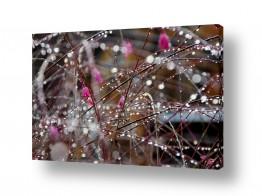 צילומים מזג-אוויר | טיפות בורוד
