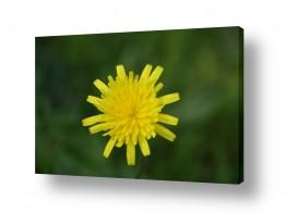 צילומים צילום תקריב | צהוב
