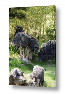 יונקים כבשה | כבש באבן