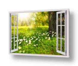 שדה חלומות מבעד חלון