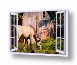 יונקים סוסים   סוס באחו