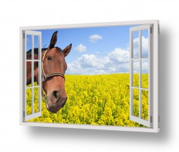 תמונות לפי נושאים חיות | סוס מציץ