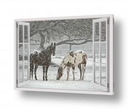 חיות יונקים | סוסים בשלג