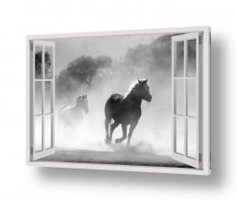 מיים ים | סוסים דוהרים