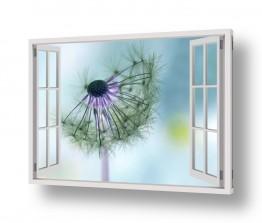 פרחים אבקנים | פרח בחלון