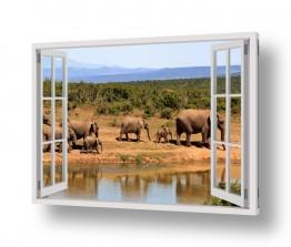 יונקים פילים   שיירת פילים