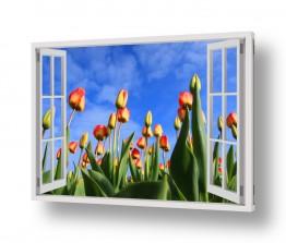 חדש באתר צילומים חדשים   צבעונים בגינה
