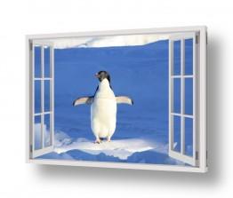 חדש באתר צילומים חדשים   פינגווין בחלון