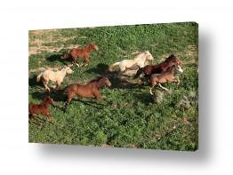צילומים צילום אוויר | רוצו בני סוסים