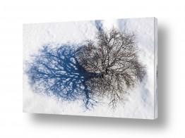אור צללית | עץ השדה