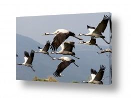 צילומים אסף סולומון | כנפיים