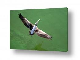 צילומים צילום אוויר   פרישת כנפיים