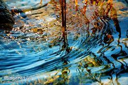 קש במים