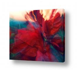 איה אפשטיין איה אפשטיין - צילומי טבע אומנותיים - פרחים | בוגנביליה בתנועה