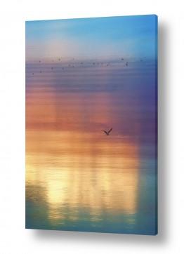 מים נוף ים | שחף