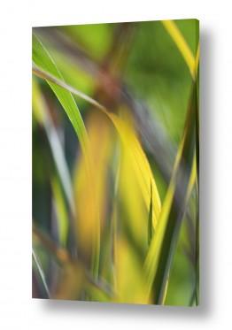 טבע מופשט שונה | Lemongrass