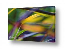 סגנונות אבסטרקט מופשט | lemongrass
