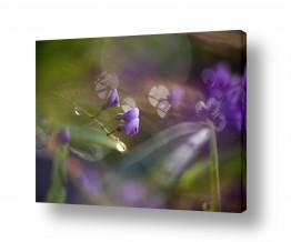 איה אפשטיין איה אפשטיין - צילומי טבע אומנותיים - פרחים | טיפות אור סגולות