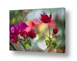 פרחים פרחים | צבעים