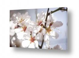 צילומים ארץ ישראלי | flower power