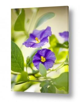 פרחים פרחים | סגול וירוק